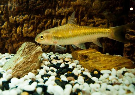 fish in stream.