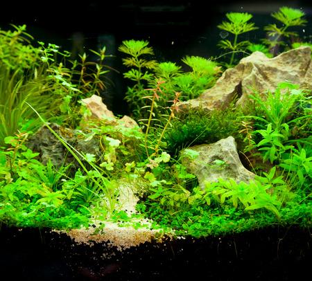 amano: Tropical aquarium