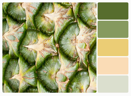 complimentary: pineapple.Color palette with complimentary swatches