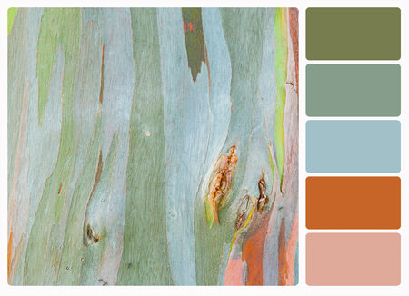 bark rain tree: Abstract painting by eucalyptus tree bark , colour palette swatches.