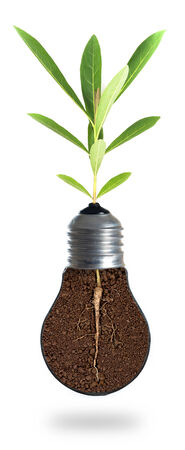 Eco concept: green tree growing out of a bulb. photo