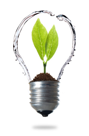 green energy concept, plant growing inside the light bulb with water photo