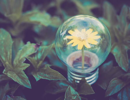 Light Bulb on green grass with Flower inside vintage feel photo