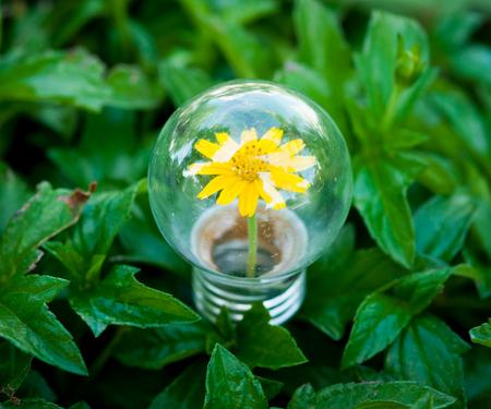 Light Bulb on green grass with Flower inside photo