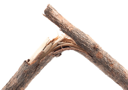 Broken Branches on white background.