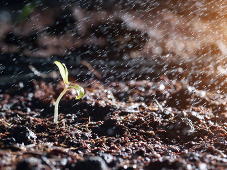 Green seedlings in new life and water photo