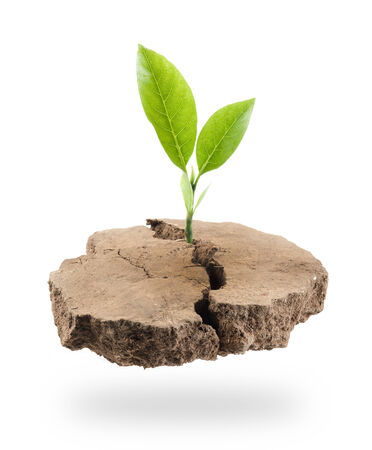 plant growing: Plant Tree growing on a floating island on white Stock Photo