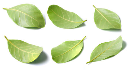 Collage of leaves photo