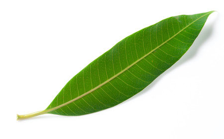 angles: Various angles of leaves Stock Photo