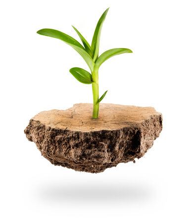Plant Tree growing on a floating island on white photo