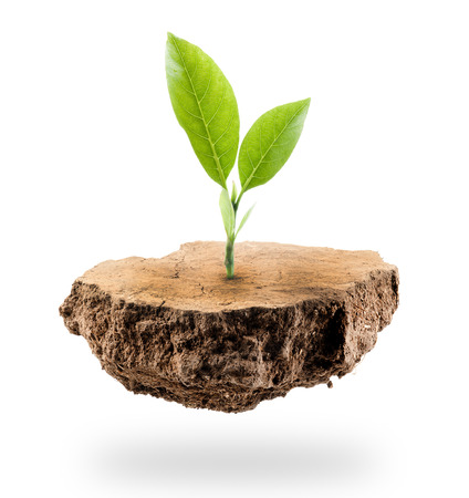 Plant Tree growing on a floating island on white Stock Photo
