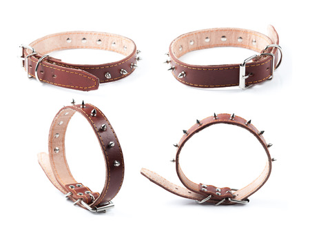 leather belt: brown leather collar with rivets on white background