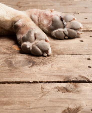 bebe enfermo: los pies y las piernas en madera de perros