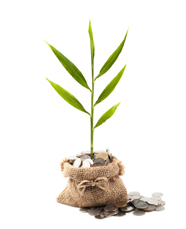 gold tree: Coins and plant in bag on white background