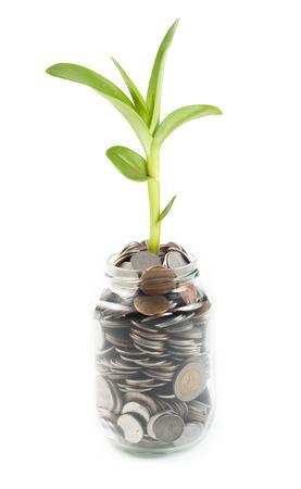 crecimiento planta: Monedas y planta en vidrio en el fondo blanco Foto de archivo