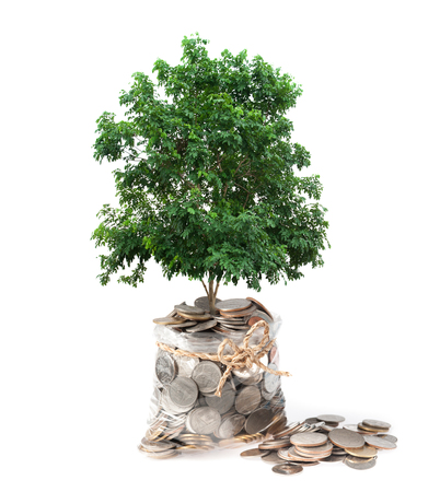 plant and coins in plastic bags on white background, investment and business concepts photo