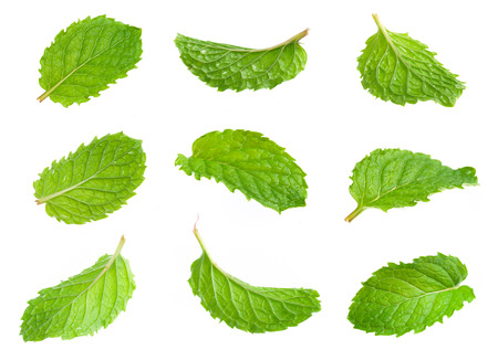 Fresh mint isolated on white. Collection