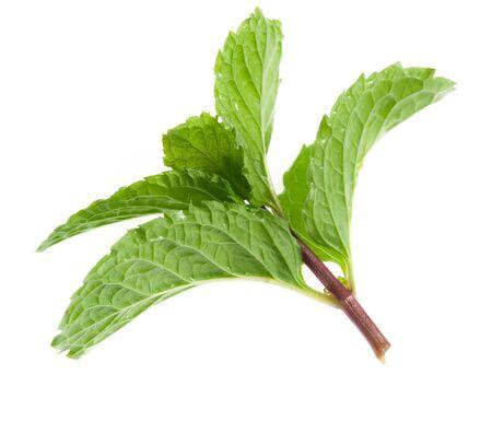 spearmint: branch of mint