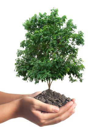 plantando arbol: �rbol fresco verde en la mano femenina aislada sobre fondo blanco