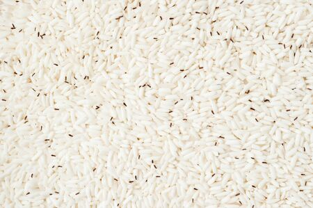 weevil: Weevil destroyed rice
