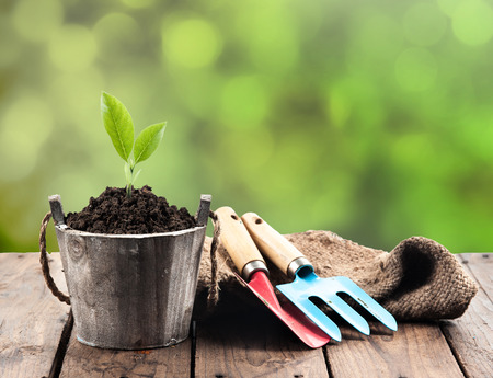 garden: Plant in pot and garden tools on perspective wood,Green bokeh background Stock Photo