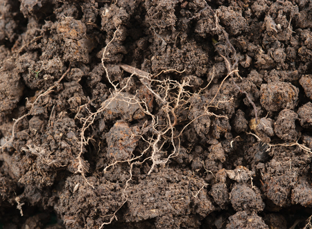 soil: Soil texture background