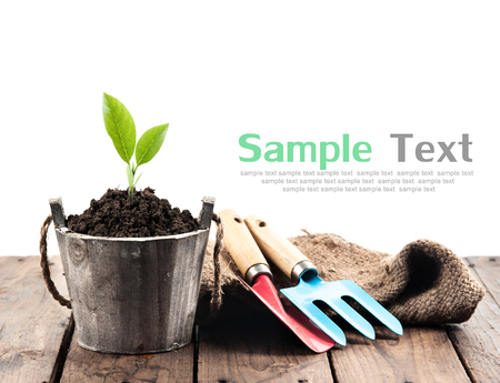 Plant in pot and garden tools on perspective wood,white background Stock Photo