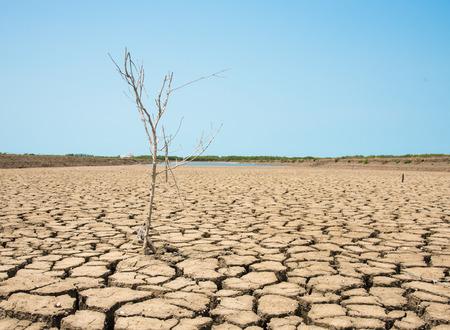 arboles secos: tierra agrietada y los �rboles muertos