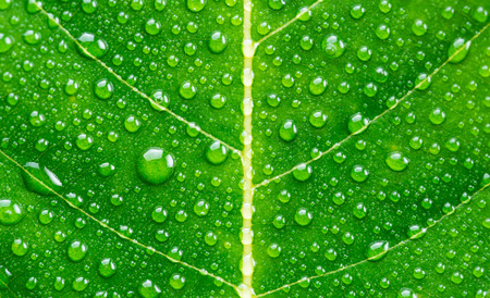 Green leaf with drops of water Stok Fotoğraf