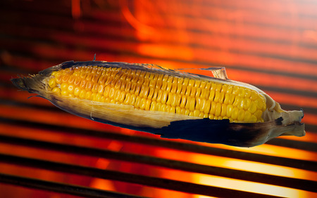 grill: Grilled sweet corn cob on the hot stove.