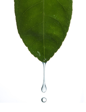 Water drop from green leaf isolated on a white background,depth of field.