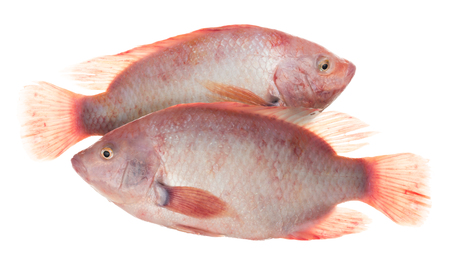 Ruby Fish or red tilapia fish isolated on white background.