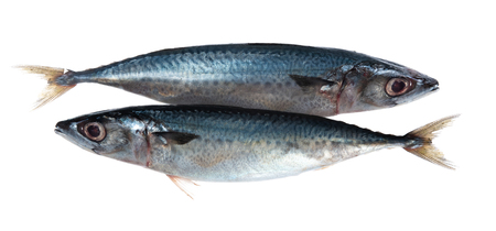 saba fish (Mackerel) isolated on white background Banque d'images