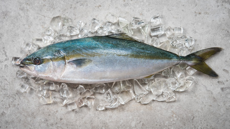 Black-banded trevally or Black-banded kingfish on ice,Ready for cooking,top view Stock Photo