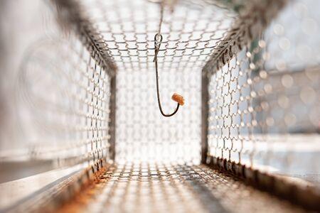 Looking inside of rat trap cage Reklamní fotografie
