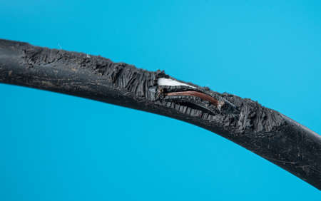 Damage on rubber of electricity wire from rat bite on blue background