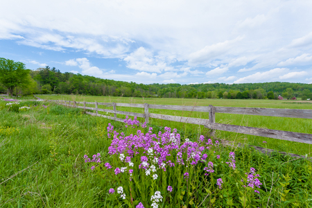 Purple and white phlox flowers blooming in front of fenced in pasture with old schoolhouse in background. This is part of Hale Farm and Village in Cuyahoga Valley National Park. Banque d'images - 100740814
