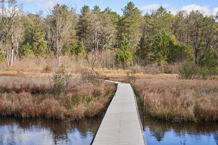 A floating boardwalk at Beaver Meadows in Allegheny National Forest. The path goes over some water, through a marshland, and into a coniferous forest with pine trees.