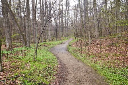 A trail leading through the woods on a spring day, with forest undergrowth beginning to pop up. The leaves are just beginning to bud on the trees.