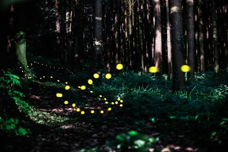 firefly: Japan Firefly