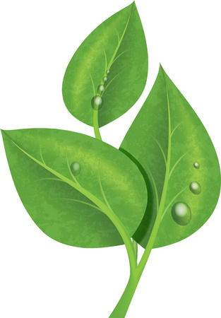 dew: Three green leaves with drops of dew - branch. Realistic illustration.