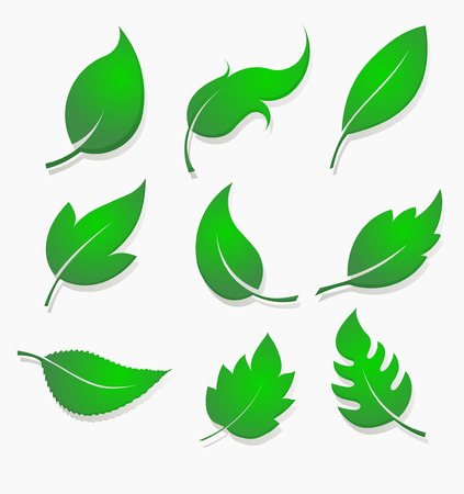 vegetate: Set of nine green leaves design elements with lighting made by gradient fill, shadow and volume. Illustration