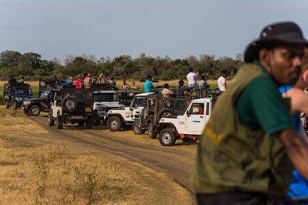 safari game drive: elefante guardando su un game drive safari Editoriali