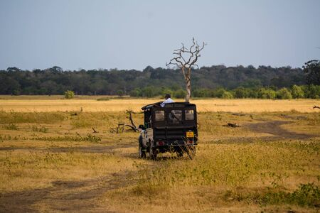 game drive: elephant watching on a safari game drive