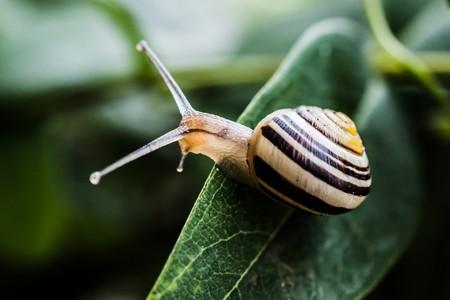 Portrait of a snail Zdjęcie Seryjne