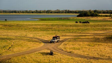 safari game drive: