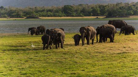 safari game drive: elefante guardando su un game drive safari Archivio Fotografico