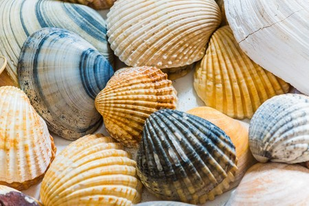 mussels: variety of mussels