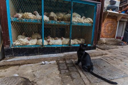 prey: cat inspecting its potential prey