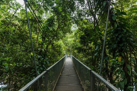 daintree: hiking in cape tribulation